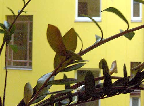 Berlin_Hasenpflanze